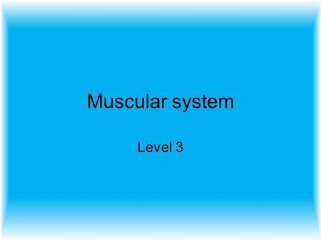 Muscular system Level 3.