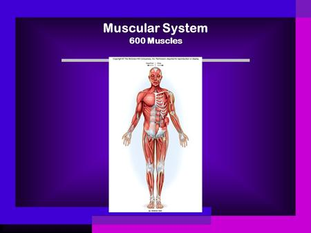 Muscular System 600 Muscles. Science Keyterms Muscle Voluntary muscle Involuntary muscle Skeletal muscle Smooth muscle Cardiac muscle Tendon.