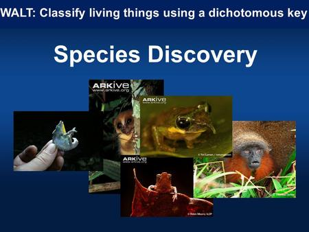 Species Discovery WALT: Classify living things using a dichotomous key.