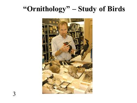 """Ornithology"" – Study of Birds 3. ART ""Bird-Man of Lascaux"" (17,000 yrs ago)"