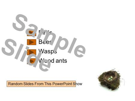 Birds Bees Wasps Wood ants Sample Slide Random Slides From This PowerPoint Show.