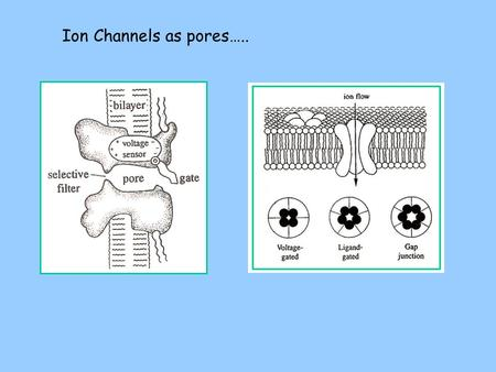 Ion Channels as pores…... High capacitance of the PL bilayer is attributed to the small length of the H-C chains (space between the parallel plates).