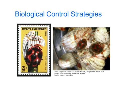 Biological Control Strategies. Bio-control Strategies Classical Biological Control Augmentation - Inundation - Inoculation Conservation Biological Control.