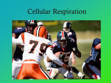 Cellular Respiration. Cellular Respiration: Harvesting Chemical Energy All living things need energy Energy in the form of… Food =chemical energy Cell.
