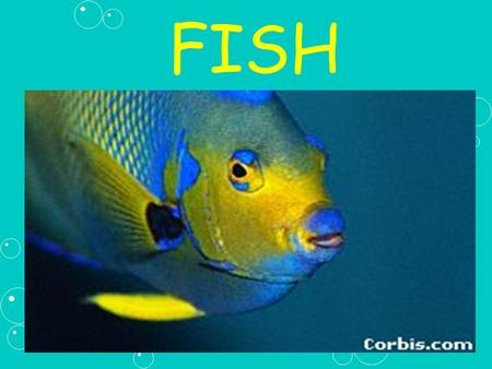 FISH. I. Characteristics of Fish A. Fish are over 1/2 the vertebrates on Earth.