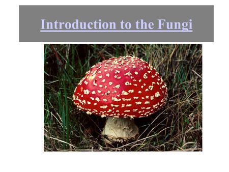 Introduction to the Fungi. Basic phylogeny How many fungi do you see?? There is only one fungus. In this picture. Most of it is underground. Each of.