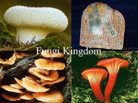 Fungi Kingdom. General Characteristics Eukaryotes Eukaryotes Cell Wall composed of chitin Cell Wall composed of chitin Heterotrophs Heterotrophs –Digest.