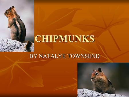 CHIPMUNKS BY NATALYE TOWNSEND. TABLE OF CONTENTS WHAT ARE CHIPMUNKS? Slide-3 WHAT ARE CHIPMUNKS? Slide-3 CHIPMUNKS AND SQURRELS Slide-4 CHIPMUNKS AND.