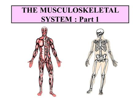 musculoskeletal system - ppt video online download, Human Body