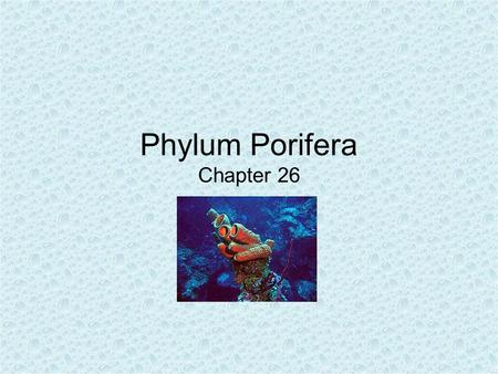 Phylum Porifera Chapter 26. General Characteristics No mouth, gut, specialized tissues or organ systems Multicellular Kept rigid through deposits of calcium.