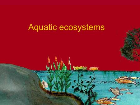 Aquatic ecosystems. Aquatic Ecosystems Marine eco systems Open sea Coastal Estuary and salt marshes Coral reefs and mangroves An ecosystem located in.