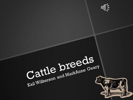 Cattle breeds Kail Wilkerson and MarkAnne Geary Angus cattle Angus is a beef breed. They came from Scotland. Ranchers like them in the snowy places because.