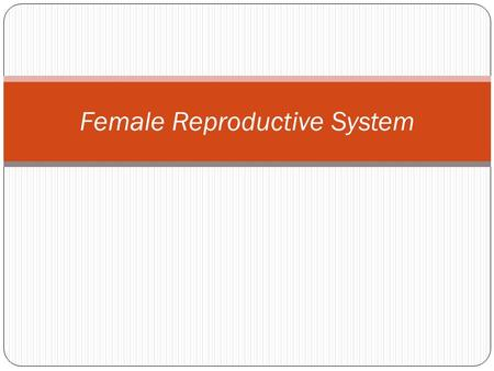 Female Reproductive System. Function of the Female Reproduction System Produce egg cell Place to support and nourish a developing human being.