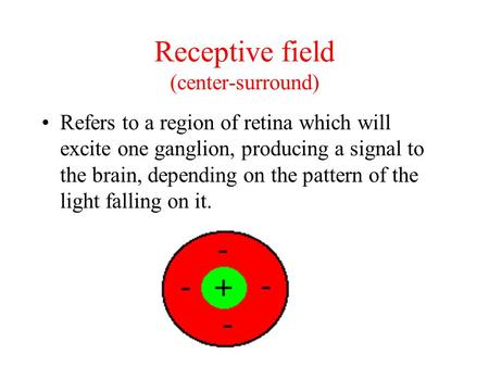 Refers to a region of retina which will excite one ganglion, producing a signal to the brain, depending on the pattern of the light falling on it. Receptive.