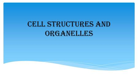 Cell Structures and Organelles. Cell Membrane Found: All Cells Location: Outer part of the cell Structure: Phospholipid bilayer Fluid, flexible Function/