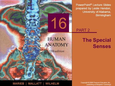 PowerPoint ® Lecture Slides prepared by Leslie Hendon, University of Alabama, Birmingham HUMAN ANATOMY fifth edition MARIEB | MALLATT | WILHELM 16 Copyright.