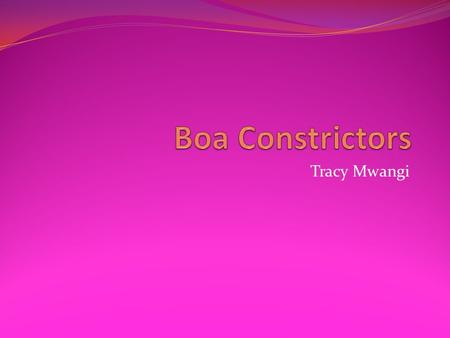 Tracy Mwangi. Inherited traits of a boa constrictor inherited of a boa constrictor Boas have a thick, heavy body with noticeable lateral compression and.