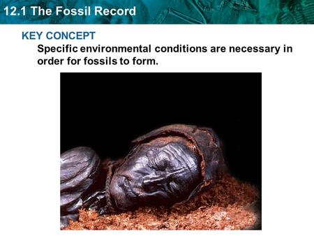12.1 The Fossil Record KEY CONCEPT Specific environmental conditions are necessary in order for fossils to form.