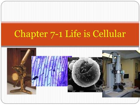 "Chapter 7-1 Life is Cellular. Early Microscopes Robert Hooke -1665 looked at a thin slice of cork, from the cork oak tree Coined the term ""cells""; looked."