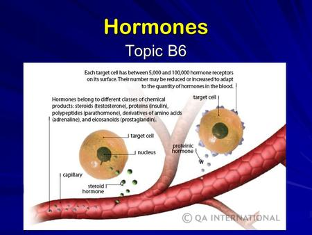 Hormones Topic B6. Production and function (B.6.1) primarily chemical messengers produced in endocrine glands – –organs that secrete directly into bloodstream.