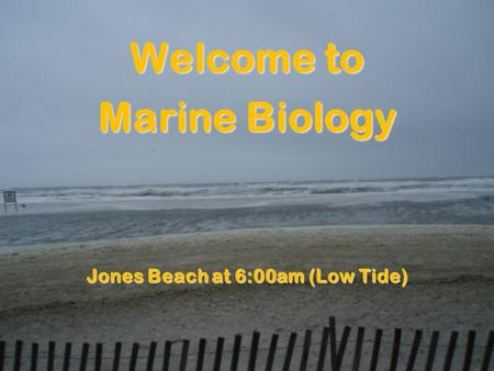 Welcome to Marine Biology Jones Beach at 6:00am (Low Tide)
