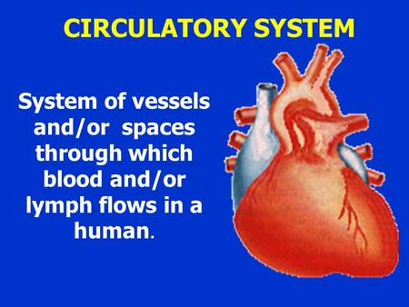 CIRCULATORY SYSTEM System of vessels and/or spaces through which blood and/or lymph flows in a human.