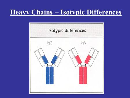 Heavy Chains – Isotypic Differences