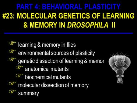 F learning & memory in flies F environmental sources of plasticity F genetic dissection of learning & memory F anatomical mutants F biochemical mutants.