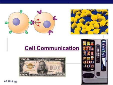 "AP Biology Cell Communication Copyright © 2005 Pearson Education, Inc. publishing as Benjamin Cummings The ""Cellular Internet"" All multicellular organisms."