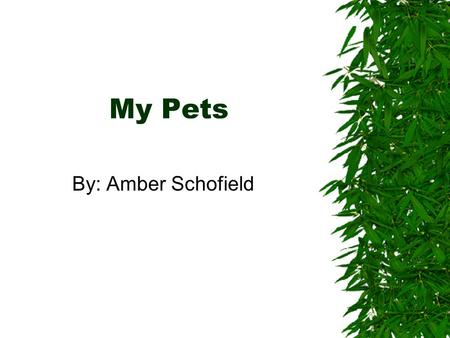 My Pets By: Amber Schofield. My Pets  My cats  My dog  My bearded dragons.