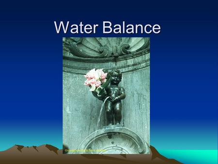 Water Balance. More water in means more urine out. Our body's water balance is regulated by our nervous system and our endrocrine system.