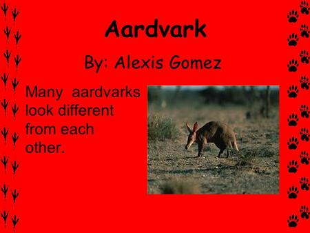 Aardvark By: Alexis Gomez Many aardvarks look different from each other.
