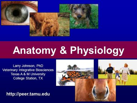 <strong>Anatomy</strong> & <strong>Physiology</strong> Larry Johnson, PhD Veterinary Integrative Biosciences Texas A & M University College Station, TX