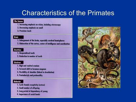 Characteristics of the Primates. Comparative Primate Anatomy.