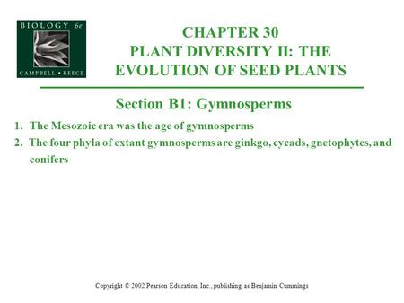 CHAPTER 30 PLANT DIVERSITY II: THE EVOLUTION OF SEED PLANTS Copyright © 2002 Pearson Education, Inc., publishing as Benjamin Cummings Section B1: Gymnosperms.