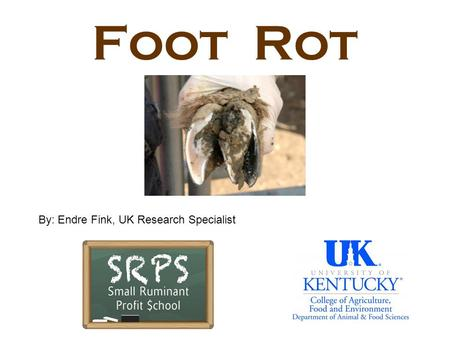 Foot Rot By: Endre Fink, UK Research Specialist.