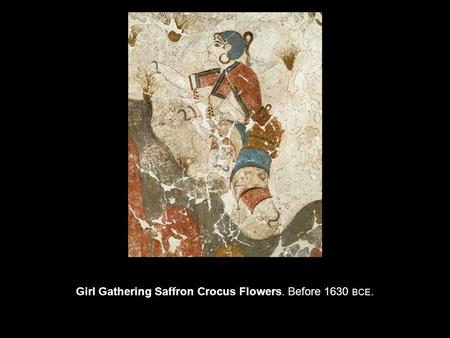 Girl Gathering Saffron Crocus Flowers. Before 1630 BCE.