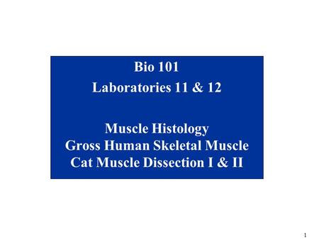 1 Bio 101 Laboratories 11 & 12 Muscle Histology Gross Human Skeletal Muscle Cat Muscle Dissection I & II.