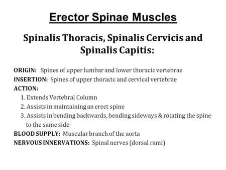 Erector Spinae Muscles Spinalis Thoracis, Spinalis Cervicis and Spinalis Capitis: ORIGIN: Spines of upper lumbar and lower thoracic vertebrae INSERTION: