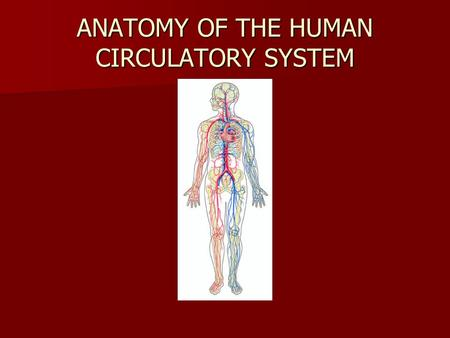 ANATOMY OF THE HUMAN CIRCULATORY SYSTEM. Blood Vessels There are three types of blood vessels in mammalian circulation: arteries, veins and capillaries.