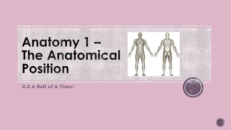 2.2 A Ball of A Time!. Anatomists have agreed on a standardised position for the human body in all cases. It is known as the anatomical position.
