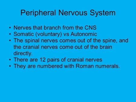 Peripheral Nervous System Nerves that branch from the CNS Somatic (voluntary) vs Autonomic The spinal nerves comes out of the spine, and the cranial nerves.