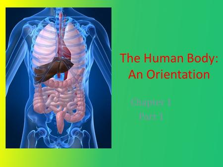 The Human Body: An Orientation Chapter 1 Part 1. Three essential concepts that unify Anatomy and Physiology: