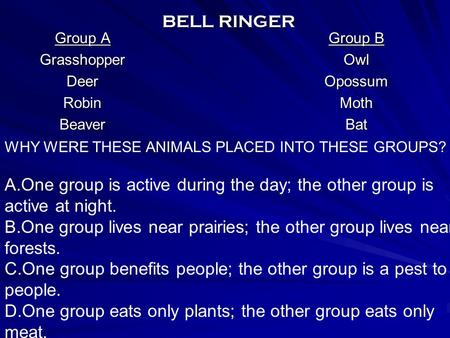 BELL RINGER Group A GrasshopperDeerRobinBeaver Group B OwlOpossumMothBat WHY WERE THESE ANIMALS PLACED INTO THESE GROUPS? A.One group is active during.