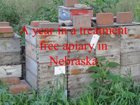 A year in a treatment free apiary in Nebraska. Presentations online Before you take copious notes, all these presentations are online here: