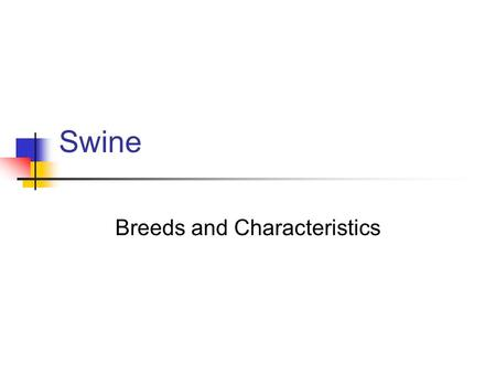 Swine Breeds and Characteristics. Berkshire Black w/ 6 white points (4 white feet, snout, tip of tail) Erect ears Lean & typically less fat than other.