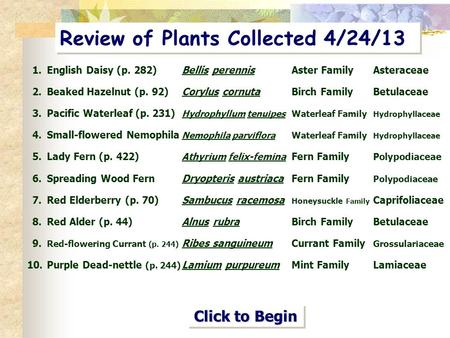 Review of Plants Collected 4/24/13 1.English Daisy (p. 282)Bellis perennisAster FamilyAsteraceae 2.Beaked Hazelnut (p. 92) Corylus cornutaBirch Family.