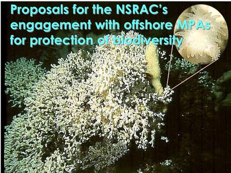 Proposals for the NSRAC's engagement with offshore MPAs for protection of biodiversity.
