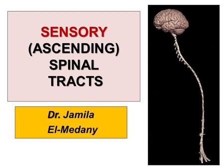SENSORY (ASCENDING) SPINAL TRACTS