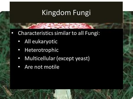 Kingdom Fungi Characteristics similar to all Fungi: All eukaryotic Heterotrophic Multicellular (except yeast) Are not motile.